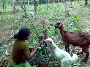 Donsa with goats